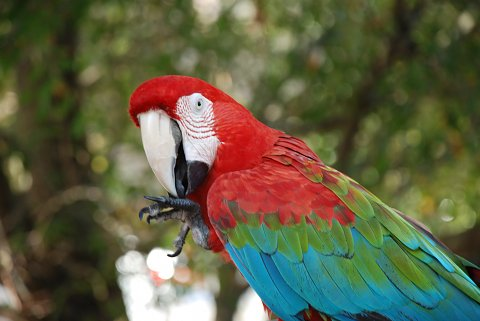 Essay On Parrot